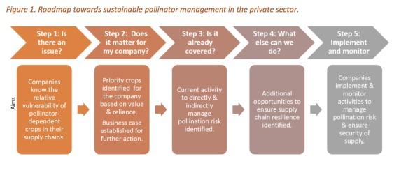 Cinco pasos para una gestión sostenible de los polinizadores dentro de las cadenas de suministro