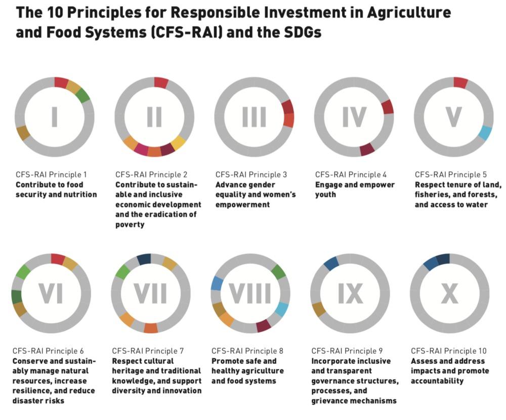 La publicación recomienda áreas clave para una mayor colaboración de las agroindustrias en temas críticos como el desarrollo de pequeños agricultores, la participación de los jóvenes en la agricultura, la responsabilidad por los impactos negativos del sector y la seguridad de la tenencia de la tierra.