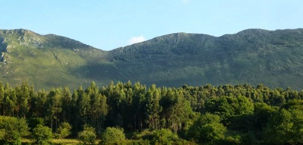 El proyecto irlandés implicará inversiones en el desarrollo de la cobertura forestal continua en los bosques comerciales irlandeses, una técnica que incluye una amplia serie de prácticas de gestión forestal cuyo objetivo es la reducción de la cantidad o el tamaño de las talas, con posibles efectos beneficiosos para la hidrología.