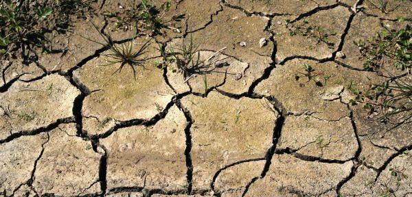 A nivel mundial, 169 países se ven afectados por la degradación de la tierra o la sequía. De ellos, 116 se han comprometido a lograr la neutralidad de la degradación de la tierra, lo que les ayuda a alcanzar la meta 15.3 de los ODS.