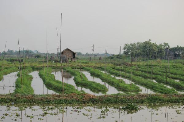 La Plataforma para la Integración de la Biodiversidad de la FAO persigue tender puentes intersectoriales, identificar sinergias, alinear objetivos y desarrollar enfoques integrados intersectoriales para reforzar y promover un uso sostenible de la biodiversidad en la agricultura, la silvicultura, la pesca y la acuicultura.