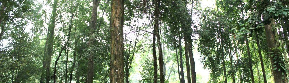 En general, los bosques suministran aproximadamente el 40 % de la energía renovable mundial en forma de combustible de madera, tanto como la energía solar, hidroeléctrica y eólica combinadas.